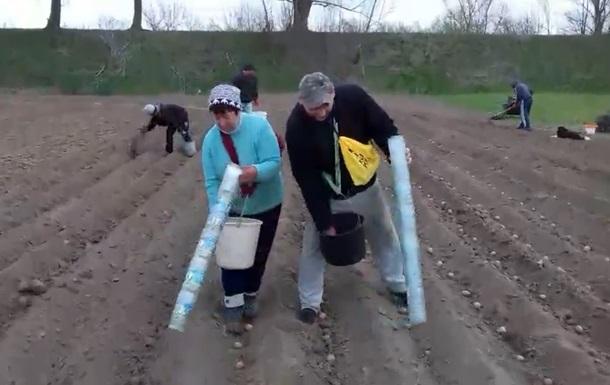 Відео з трубою для картоплі зібрало півмільйона переглядів