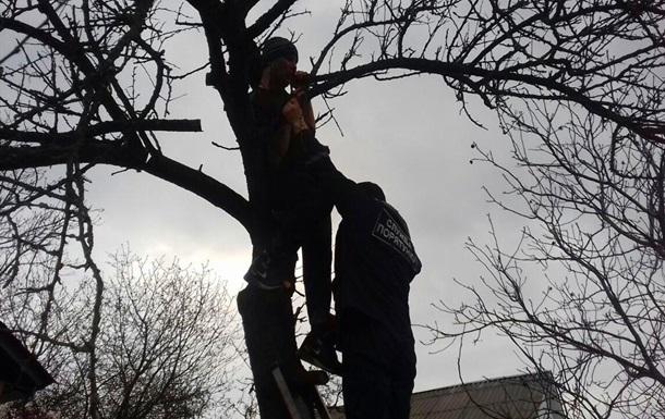 У Київській області врятували чоловіка, який застряг на дереві