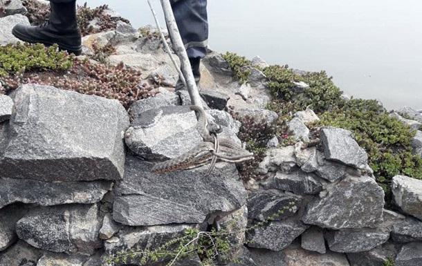 У ресторані Дніпра знайшли 18 змій