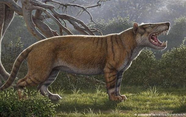 Палеонтологи відкрили в Кенії гігантського предка сучасних левів