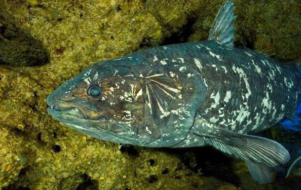 Вчені змоделювали скелет найдавнішої у світі риби