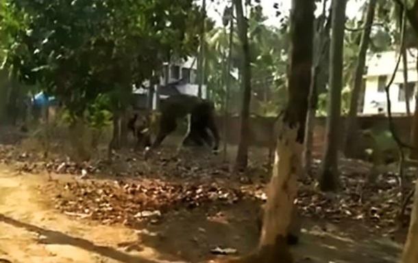 Голодний слон убив дресирувальника, який забув його погодувати