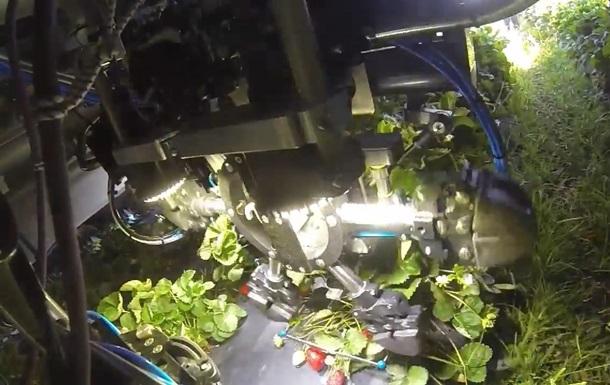 У США створили роботів для збирання полуниці
