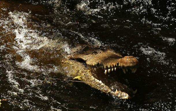 Крокодил убил мужчину и плавал с его телом в пасти