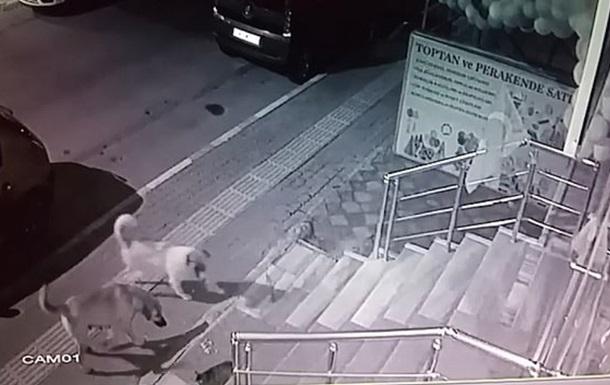 Кота, який налякав зграю собак, зняли на відео