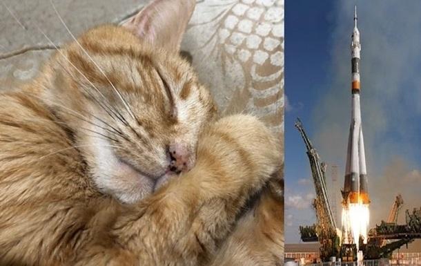 В Сети собирают деньги на похороны кота в космосе