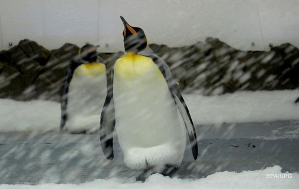 В Антарктиді зникла одна з найбільших колоній пінгвінів