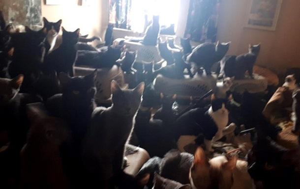 У канадца в квартире нашли 300 котов