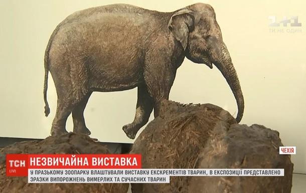 В Праге открыли выставку экскрементов