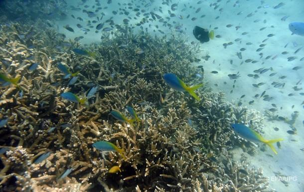 Ученые нашли новую форму жизни в океане