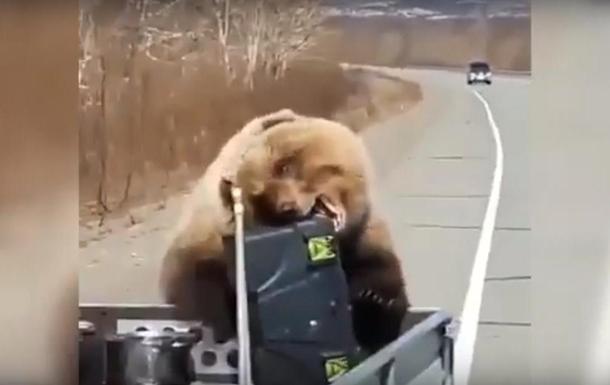 Медведь вытащил из машины охотников еду