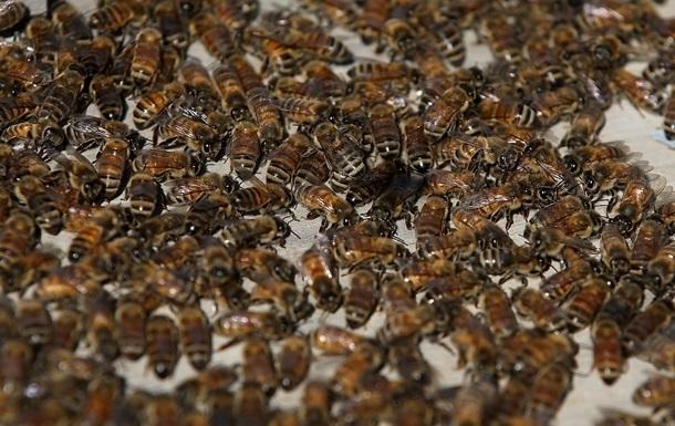 У Тернопільській області зафіксовано мор бджіл