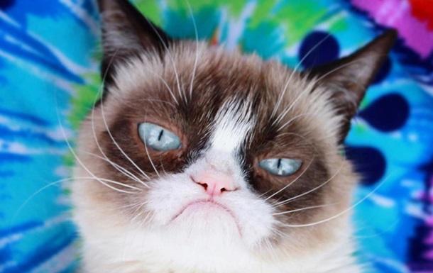 Кошка по прозвищу Grumpy Cat умерла после болезни