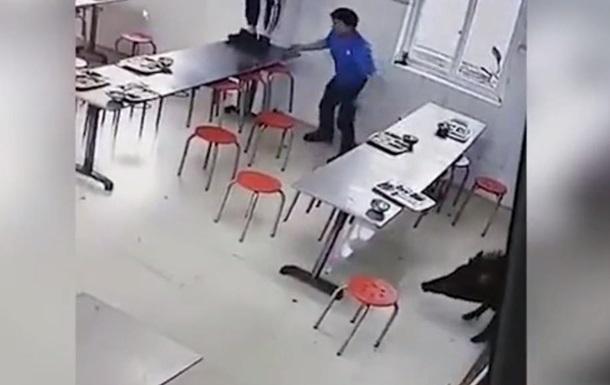 Дикого кабана, який трощив їдальню, зняли на відео