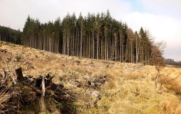 У Зеленского обещают остановить вырубку лесов