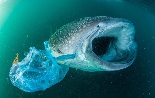 Ежегодно в океан попадает до 12 млн тонн пластика