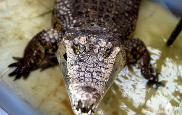 Селяне поймали и убили крокодила-людоеда