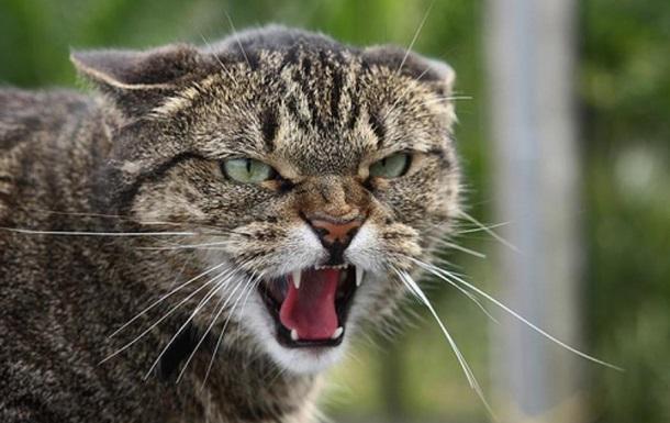 В Одеській області скажена кішка покусала людей