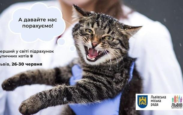 У Львові вперше в світі підрахують бродячих котів