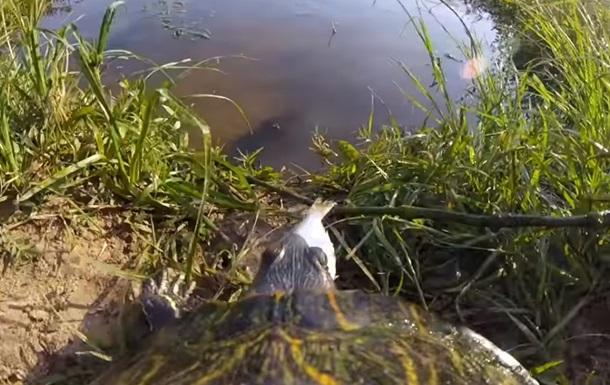 Американец удивил Сеть, надев камеру на черепаху