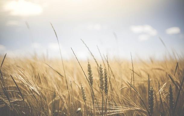 Знайдено спосіб стабілізувати поставки продовольства по всьому світу