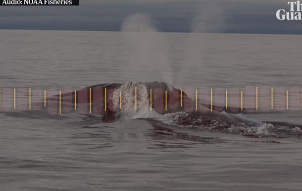 Пение редчайшего японского кита записали впервые