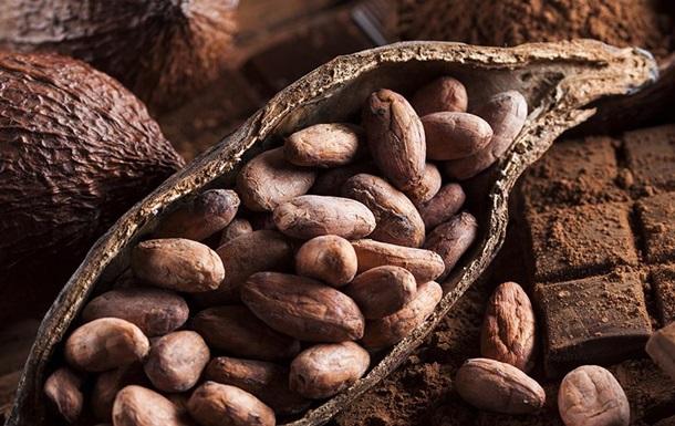 Какао-бобы способны продлить жизнь и избавить от ожирения