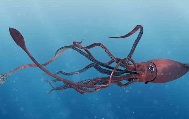 У Мексиканській затоці виявили гігантського кальмара