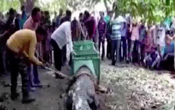 Заползшему в храм гигантскому крокодилу стали поклоняться
