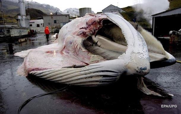 Япония разрешила вылов 227 китов трех видов