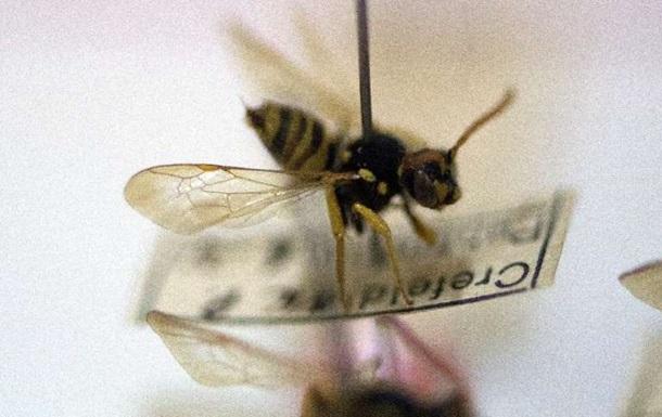 Ученые заявили о массовом вымирании насекомых