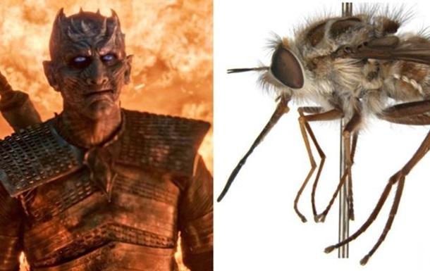 Мух, превращающих насекомых в  зомби , назвали Королем Ночи