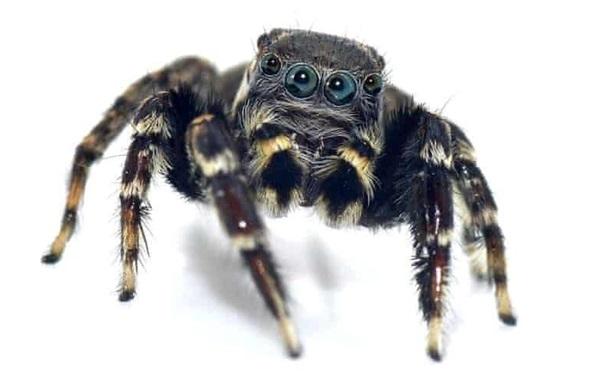 Ученые назвали паука в честь Карла Лагерфельда