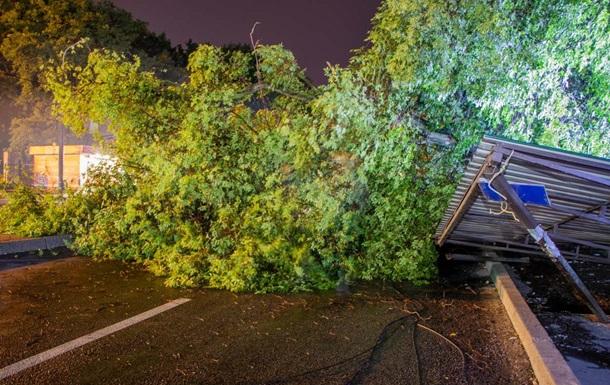 Негода в Україні: повалені дерева травмували чотирьох людей