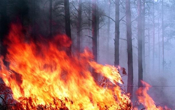 Спасатели локализовали пожар в заминированном лесу под Станицей Луганской