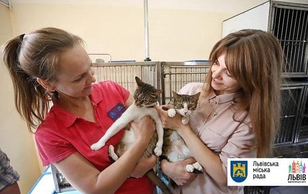 Во Львове подсчитали бродячих котов