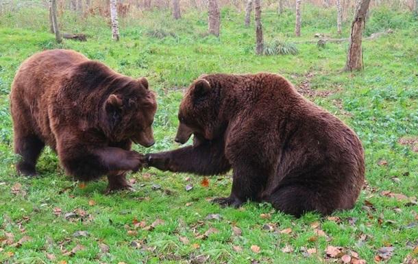 Ведмеді в зоопарку побилися за морозиво