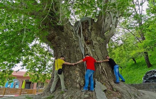В Азербайджані давнє дерево придавило туристів
