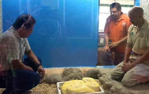 Питон напал на неосторожного смотрителя зоопарка