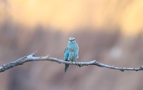 В Кривом Роге фотограф снял редчайшую птицу