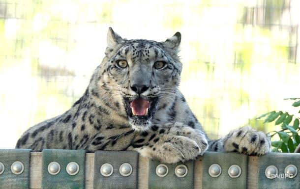 В Індії леопард атакував сплячого чоловіка в його будинку