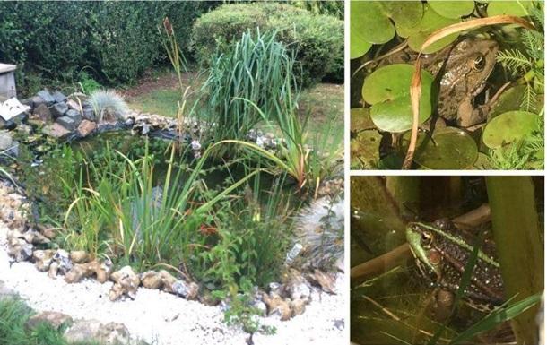 Во Франции месяц расследуют дело о громко квакающих лягушках