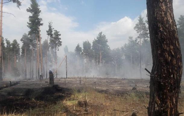 Масштабный лесной пожар произошел в Херсонской области