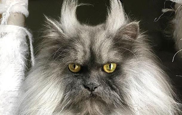 Сеть покорил новый хмурый кот