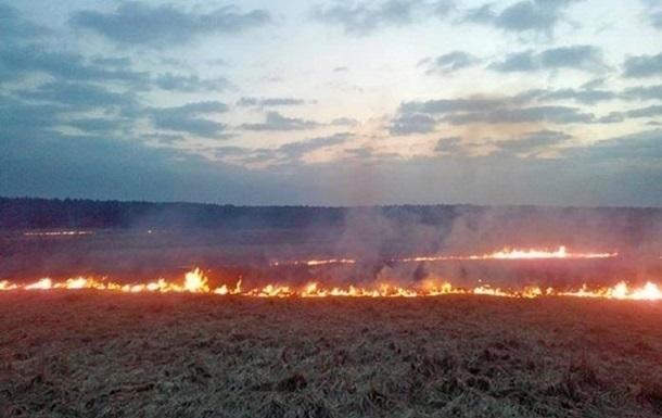 Под Киевом сгорело 23 гектара пшеницы