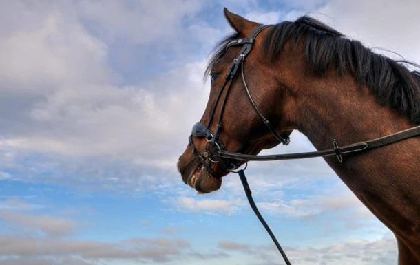 На Харьковщине нашли тело 14-летней девушки, привязанное к лошади