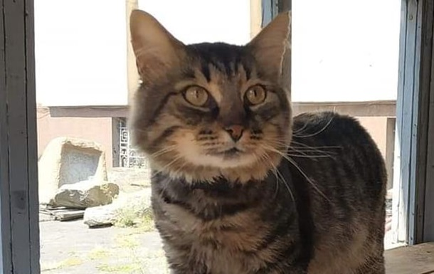 В исторический музей Днепра взяли на работу кота