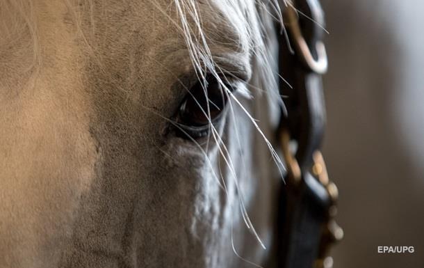 У поліції розповіли подробиці смерті дівчини через переляканого коня