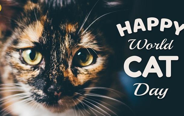 В мире 8 августа отмечают День кошек