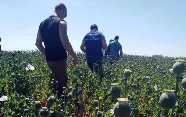 На Полтавщині знайшли безпрецедентно велике поле снодійного маку